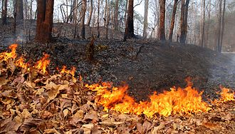 Environmental issues in Thailand - Forest fire, Mae Hong Son Province, March 2010