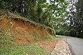 Forest roadside erosion DSC 5128.jpg