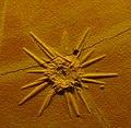 Fossil sea urchin 23.jpg