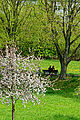 Frühling im Bad Mergentheimer Kurpark. 06.jpg