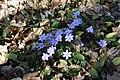 Frühlingsrundwanderung Schmücke bei Heldrungen - panoramio (4).jpg