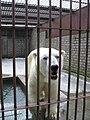 FranzJääkaru2005.jpg