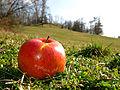 Free Red Apple on Green Grass of Fertility.jpg