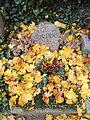 Friedhof der Dorotheenstädt. und Friedrichwerderschen Gemeinden Dorotheenstädt. Friedhof Okt.2016 - 18.jpg