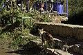 Friendly Ourika cat (11277925065).jpg