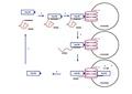 Función de la secuencia KFERQ en la autofagia mediada por chaperonas..pdf