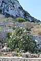 Gagliano del Capo - panoramio (2).jpg