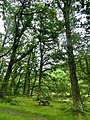 Ganllwyd - panoramio (5).jpg