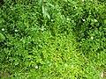 Gardenology.org-IMG 2924 rbgs11jan.jpg