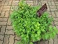 Gardenology.org-IMG 7956 qsbg11mar.jpg
