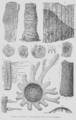 Geology and Mineralogy considered with reference to Natural Theology, plate 56.png