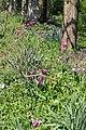 Giverny, Fondation Claude Monet, jardin8.jpg