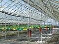 Glasshouse crops 3.jpg