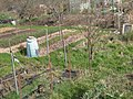 Gledhow Valley Allotments 18 March 2019 11.jpg