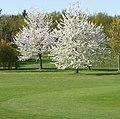 Golfplatz - panoramio (11).jpg