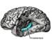 75px-Gray739-emphasizing-hippocampus.png