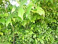 Greenwood forest farming 07.JPG