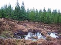 Greshornish Forest - geograph.org.uk - 1712791.jpg