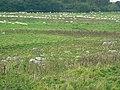 Grey Wethers, Fyfield Down NNR, west of Manton - geograph.org.uk - 968722.jpg