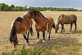 Hästar Tofta kyrka.jpg