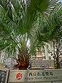 HK 佐敦 Jordan 西貢街遊樂場 Saigon Street Playground name sign Jan-2014 tree.JPG
