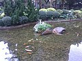 HK Tai Kok Tsui 樂群街公園 Lok Kwan Street Park water pool view 06 golden fishes Dec-2012.jpg