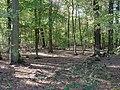 Hambach forest 52.jpg