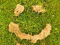 Have a Grassy Day (15473463581).jpg