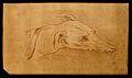 Head of a dog. Drawing, c. 1789. Wellcome V0009139ER.jpg