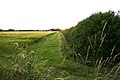 Hedge field boundary off the A10 - geograph.org.uk - 856814.jpg
