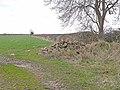 Hedgerow near Ogle - geograph.org.uk - 1800080.jpg