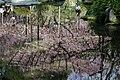 Heian Shrine (5767169208).jpg