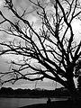 Help for tree.jpg
