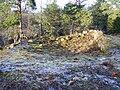 Henriksborgs ruin, den 18 december 2008, bild 16.JPG