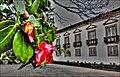 Hibiscus - panoramio (5).jpg