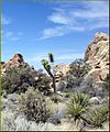Hidden Valley, Joshua Tree NP 4-13-13g (8689099647).jpg