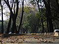 Hojas en Chapultepec.JPG