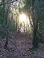 Holmbury Hillside - geograph.org.uk - 1093441.jpg