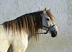 Horse December 2014-2.jpg