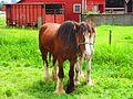 Horses (7715135094).jpg