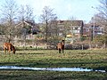 Horses grazing alongside the A36 at Canada Corner - geograph.org.uk - 744346.jpg