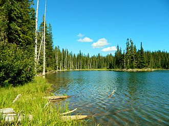 Horseshoe Lake (Washington) - Sunny Shore of Horseshoe Lake