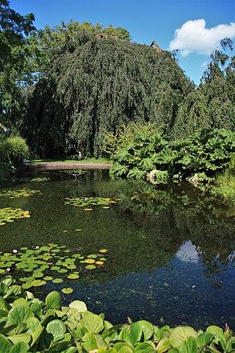 Hortus Botanicus Leiden - A lake at the Hortus Botanicus