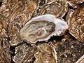 Huîtres de Normandie.jpg