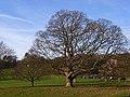 Hughenden Park - geograph.org.uk - 1066040.jpg