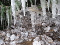 Ice-covered bamboo2.JPG