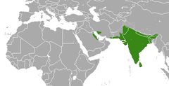 Indian Gray Mongoose area.png