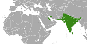 Indian grey mongoose range