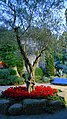 JARDINS DELS ALEMANYS (GIRONA-TEMPS DE FLORS 2014) - panoramio.jpg