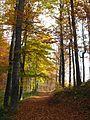 Jablanik - zapadna Srbija - mesto Debelo brdo - Na putu ka vrhu Jablanika - Bukova šuma u jesen 6.jpg